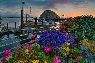 morro bay flowers 3640
