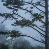 morro bay fog 7915