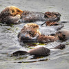 otters 0413-