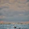 seagulls storm 7042-