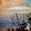 morro bay birds-5111