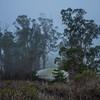 morro bay fog 7918