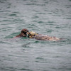 morro bay otters 3415