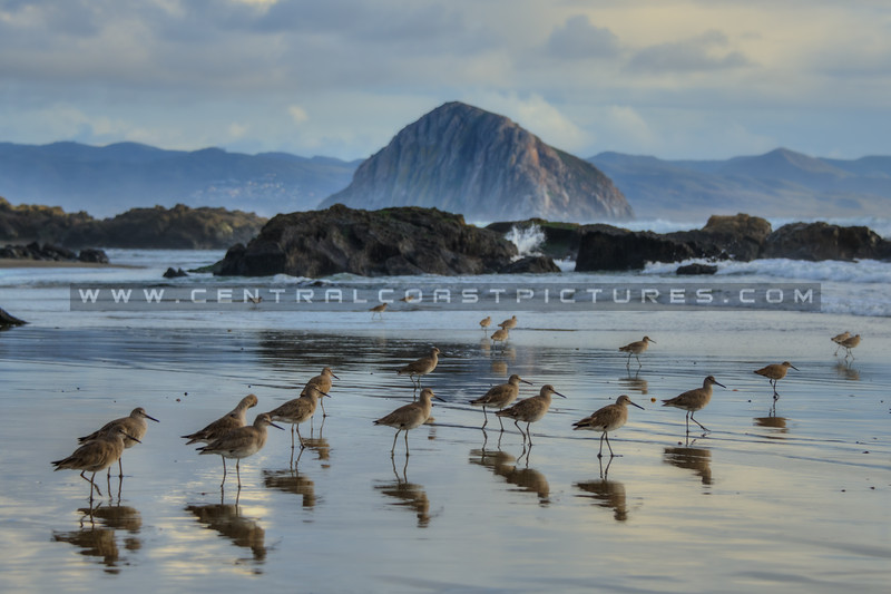 morro bay birds 6996-