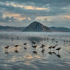 morro bay birds 7136-