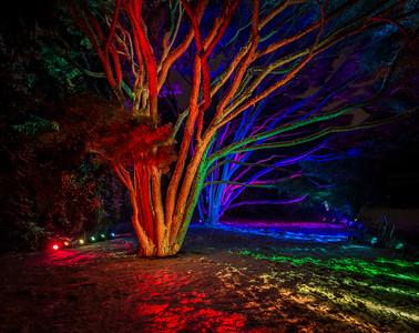 Morton Arboretum Illumination in Lisle, IL