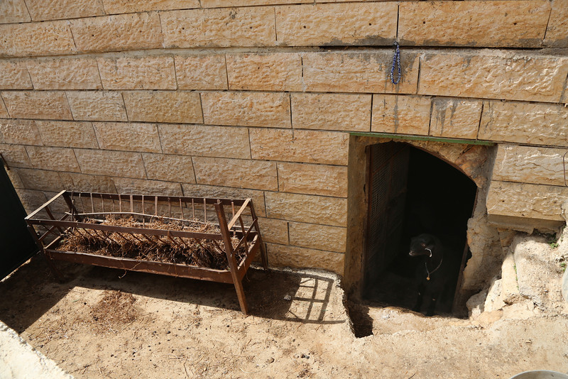 a modern day 'manger' - where the animals are kept in a Palestinian home