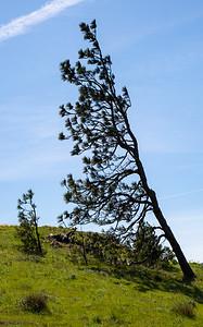 Flag Tree