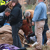 A horse by the name of Charlie got lose from it's barn just after noon on Tuesday in Westminster. It fell on some ice just off of Overlook Road and could not get back up. Many came out to help and it took till about 3:30 before they where able to pull him to safety. SENTINEL & ENTERPRISE/JOHN LOVE