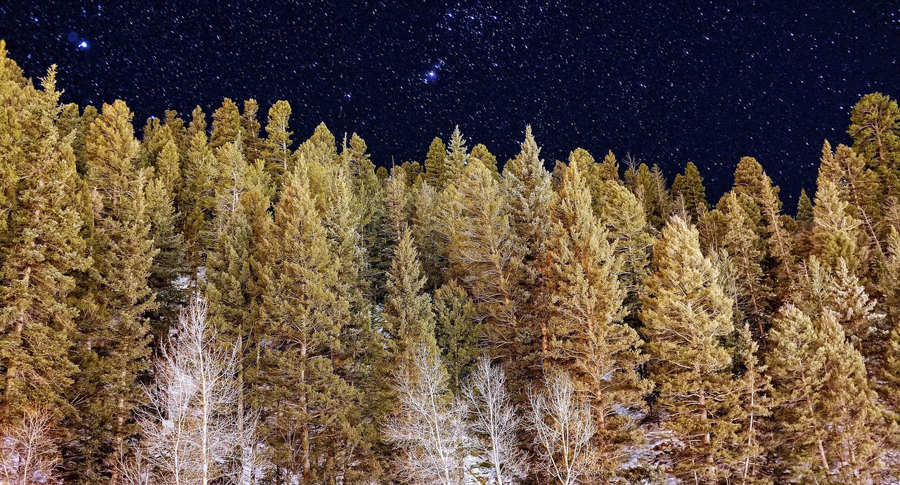 Pine trees and stars, Red River, New Mexico