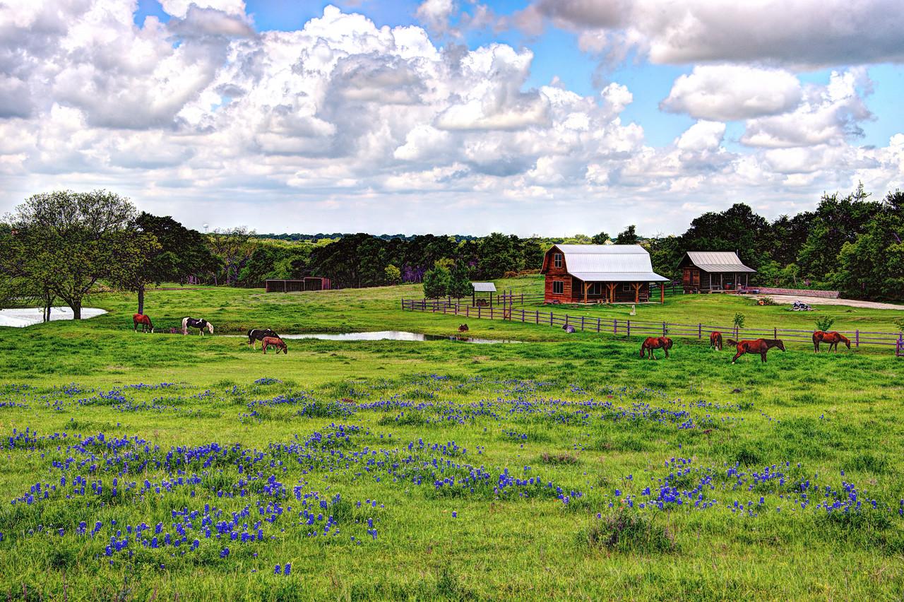 Springtime in Texas