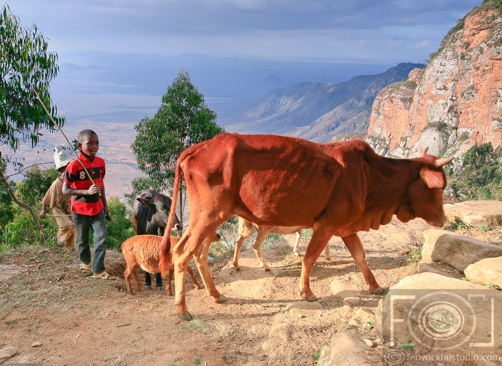 The Cattle Herder