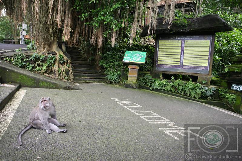 The Monkey Forest Sancturary - Ubud - Bali