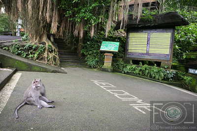 The Monkey Forest Sancturary - Ubud - Bali