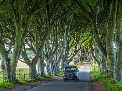 Black Taxi at the Dark Hedges in Northern Ireland