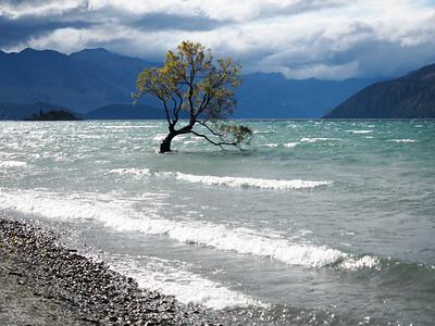 The Wanaka Tree in New Zealand