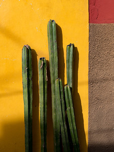 Cactus against a colorful wall