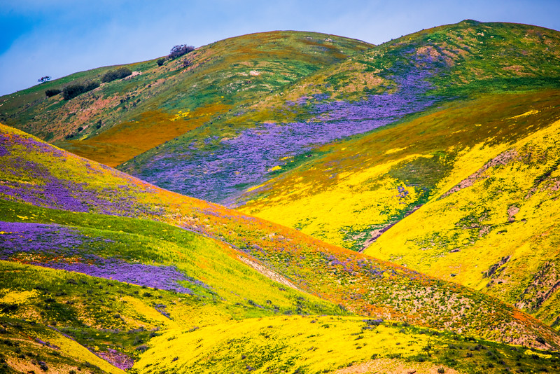 Superbloom Carrizo Plains National Monument Tembler Range Desert Spring Wildflowers Fine Art Photography 45EPIC Dr. Elliot McGucken Fine Art Landscape and Nature Photography!  God Spilled Paint!