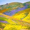 Superbloom Carrizo Plains National Monument Tembler Range Desert Spring Wildflowers Fine Art Photography 45EPIC Dr. Elliot McGucken Fine Art Landscape and Nature Photography!  God Spilled Paint!