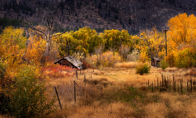 Gold Rush In The Autumn Breeze II