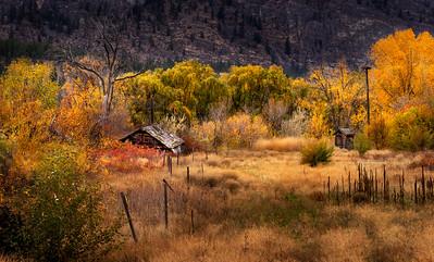 Gold Rush In The Autumn Breeze II