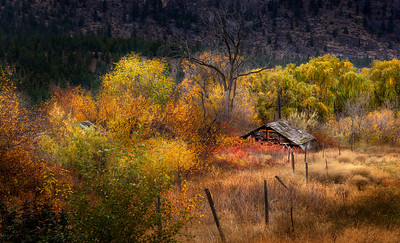Gold Rush In The Autumn Breeze