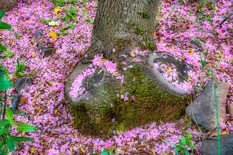 Petal Passion Pink