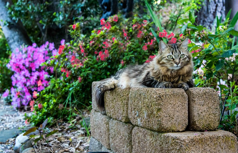 Cat in Spring Bloom