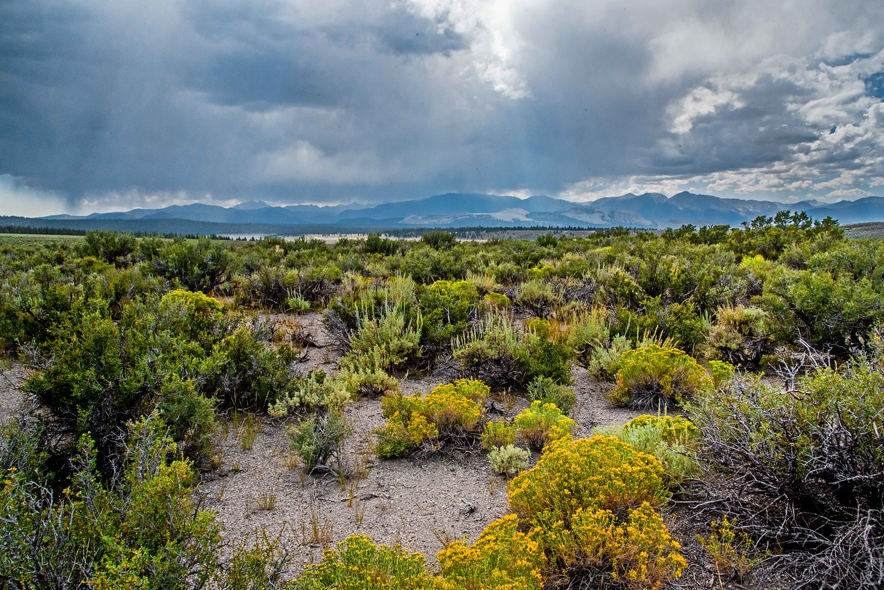 Sagehen Summit, Mono Lake, CA