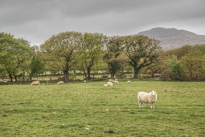 Near Pentre Ifan Dolmen Burial Chamber, Wales