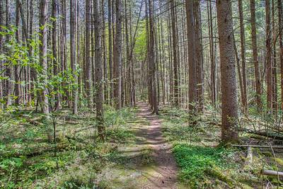Kelly Hollow Trail, Margaretville, New York, USA