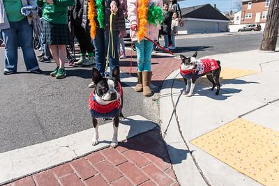 Allentown, Pa Saint Patty's Day