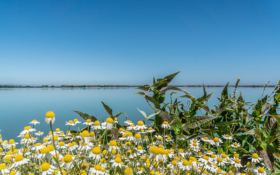 Sunnyale marshlands CA_140719_DSB1081