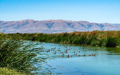 Sunnyale marshlands CA_140719_DSB1092