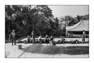 Oriente_Coffee Crop Picking_1965_004