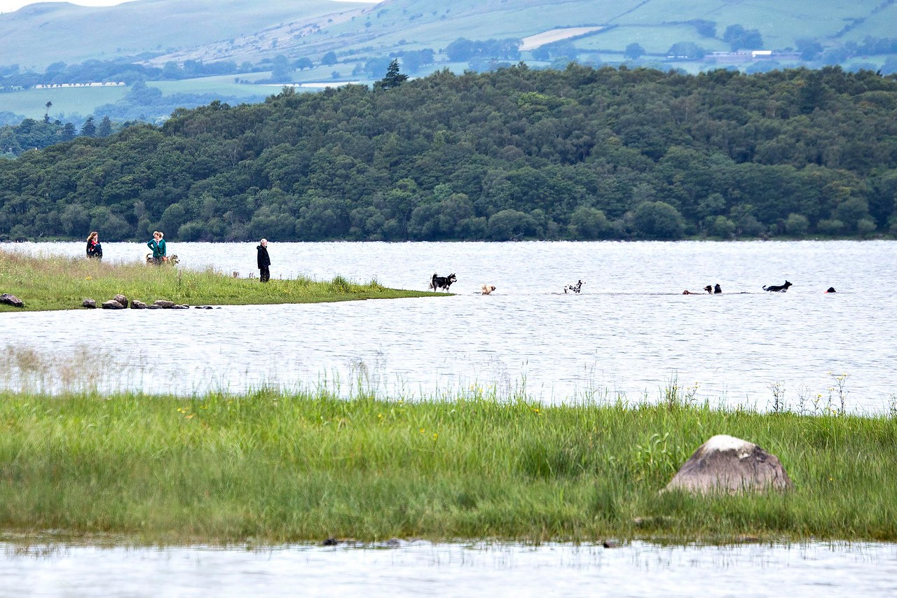 Tue 11th Jul : Blackstock Point : Dog Pack At Play