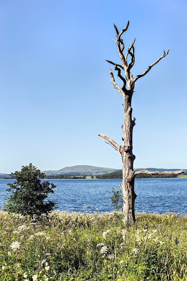Mon 17th Jul : Hursthole Point : Binsey