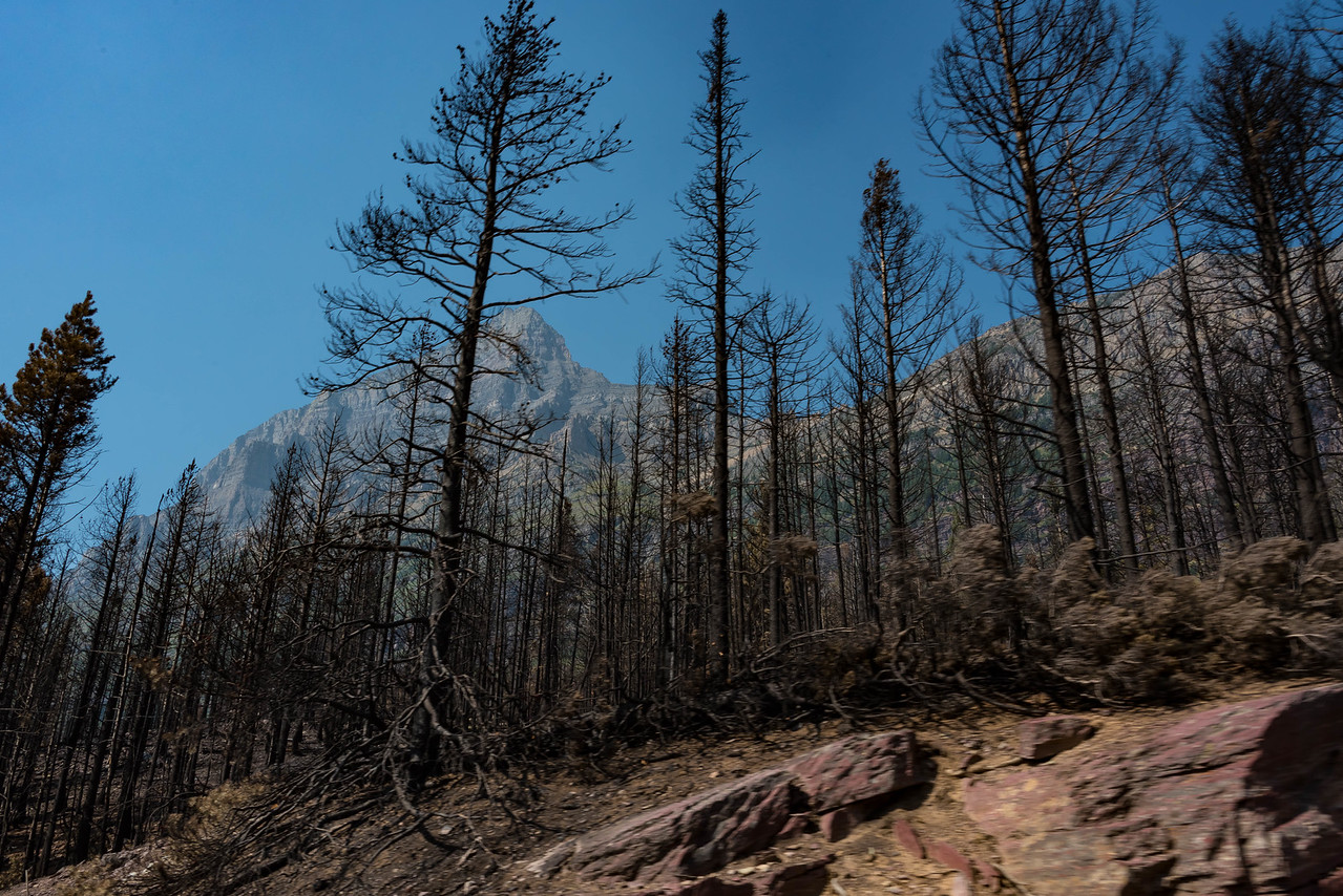 Recent forest fire