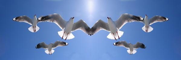 Six Heavenly Seagulls .... in Birds Coastal gallery.