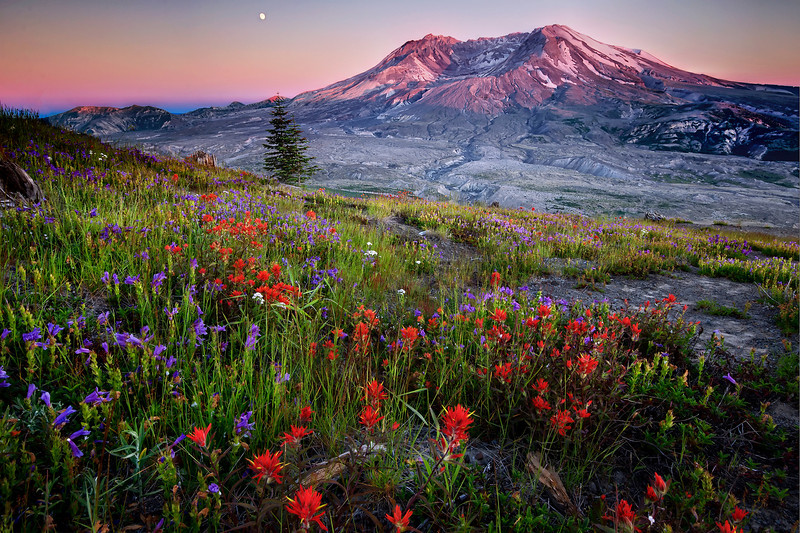 """hues of defiance"" - Mount St Helens wildflowers at sunset"