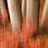 fall color abstract - Alaska