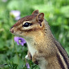Chipmonk @ Home