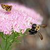 Bee  & Skipper @ Home