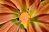 FlowersAfter_NZ71599012fs