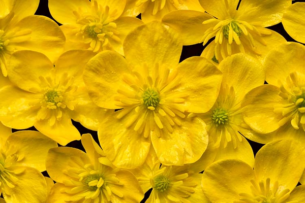 Yellow_NZ72208L