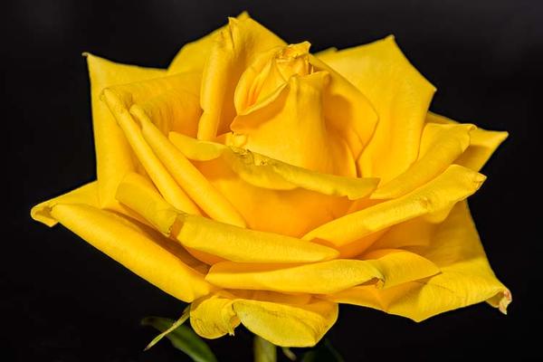 Rose_NZ73792x15(B,Radius5,Smoothing3)