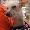 """Dobby getting """"preeny"""" from attention at adoptions!"""