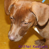 BRAND NEW -- already fostered to adopt -- Cocoa