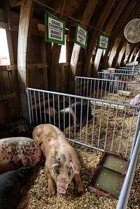 At the Johnson County Fair