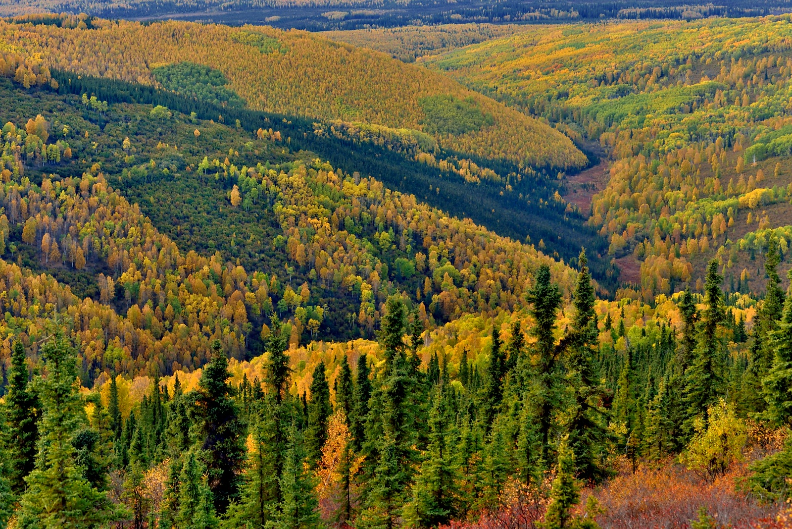 Fall colors, seen from Ester Dome